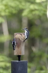Jim's Birdacious Bark Butter Feeder